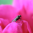 King of the rose by MistyIslet