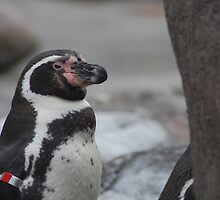 Exasperated Penguin by Geoffrey Gailey