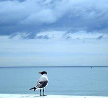 Bird's Eye View   ^ by ctheworld