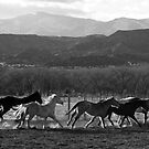 Herd on the Run by BarneyB