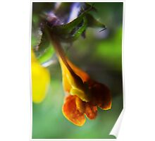 I am small, but I am FINE  (from wild flowers collection) Poster