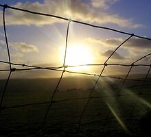 Sunset through Wire by ritablue