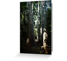 Kauri Avenue - Paronella Park Greeting Card