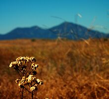 Saddleback Mountains by Julie Moore