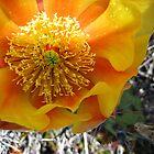Cactus Flower by Bellavista2