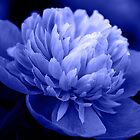 Blue Peony by Sandy Keeton