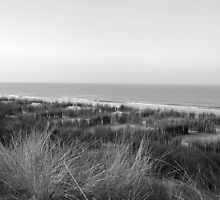 Dunes and sea in winter sun by steppeland