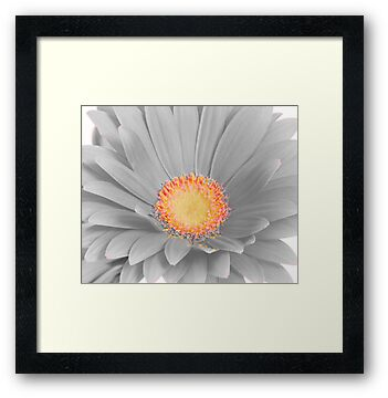 Gerbera Daisy with Yellow Center by Suz Garten