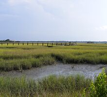 Matanzas River tidal marsh , St. Augustine ,Florida by jim1911