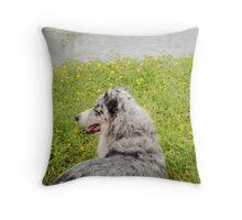 Australian Shepherd Gazes at Pond Throw Pillow