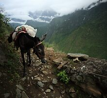 Pack Mule by Andrew Willesee