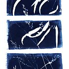 Flora of the Felton Valley, Australia Cyanotype Photogram by Lorraine Seipel
