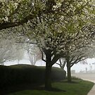 BLOSSOMS IN THE MIST by Lori Deiter