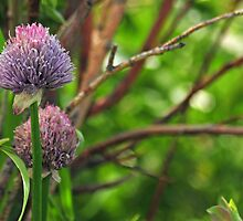 Wild Onions by Donna Ridgway