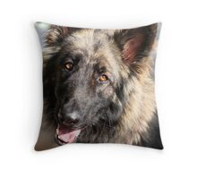 Max the Shilo Shepherd Throw Pillow