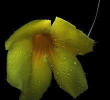 Striped Yellow by Dennis Rubin IPA