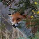 A Cheeky Chap by Dave  Butcher