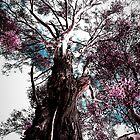 Australian Gum Tree by Destrier