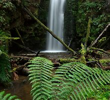 Wild Dog Falls - Great Otway National Park by ShaneBooth