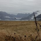 Knobs Flat, road to Milford Sound, New Zealand by fns720