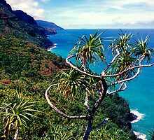 Na Pali Coast Trail  by kevin smith  skystudiohawaii