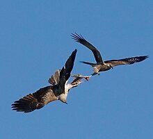 Rampaging Raptors by aluzhun