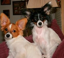 Buddy and Mia by BarbaraWilliams