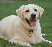 White Lab by JohnBassler