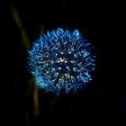 Blue Dandelion by Destrier