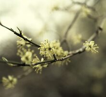 Spring flowers by Tutelarix