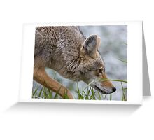 Hot On The Trail... Greeting Card