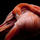 Flamingo, finally by richardseah