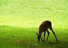 Deer by elasita