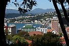 Oriental Bay, Wellington, NZ by Mike Warman