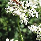 Bugs by John Thurgood