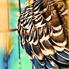 jubba the hut -my budgie - Shadow-Sun-Sleepy  by mandyemblow