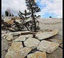Yosemite pine and pentagon rocks by Coastalbloke