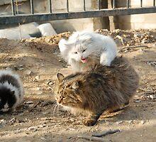Stray Cats by ScottBittinger