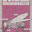 Drosophila melanogaster... by buyart