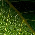 Green by KitPhoto