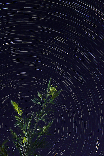 Star Trails  by EOS20