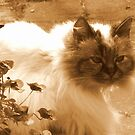 Nina in Sepia by ienemien