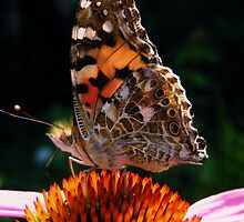 Painted Lady by Yool