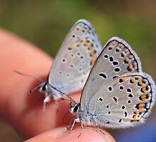 Butterfly Whisperer by jenndes