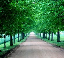 Plantation Road by AntonLee