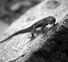 lizard. by Cecilia Clifford