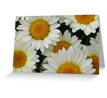 Happy Daisy  © Greeting Card