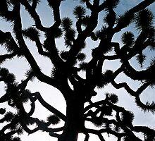 Daniel's Joshua Tree Surprise by Danimal11
