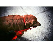 He'd Rather Walk Me Photographic Print