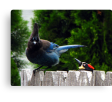 Acorn Woodpeckers Sneak Attack  Canvas Print